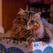 Thumbnail for Holiday Gift Ideas for Your Pets